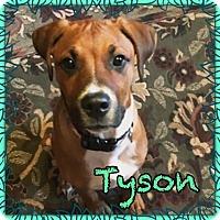 Adopt A Pet :: Tyson - oxford, NJ