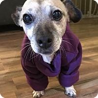 Adopt A Pet :: Sable-DIABETIC - Battleboro, VT