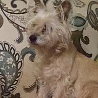 Adopt A Pet :: Baby Girl - Courtland, AL