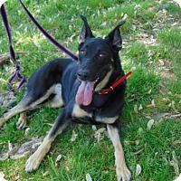 Adopt A Pet :: Jessie - Portland, ME