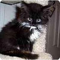 Adopt A Pet :: Holden - Arlington, VA