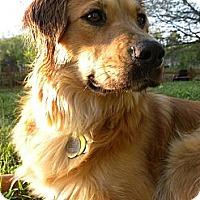 Adopt A Pet :: Ellie - White River Junction, VT