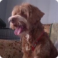 Adopt A Pet :: Arlo - Madison, WI