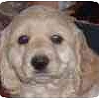 Adopt A Pet :: Sweet Willy in Flagstaff - Scottsdale, AZ