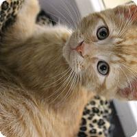 Adopt A Pet :: Speedy - Medina, OH