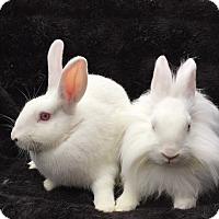 Adopt A Pet :: Sprout & Mowgli - Watauga, TX