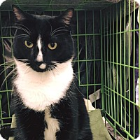Adopt A Pet :: Coltrane - N. Billerica, MA