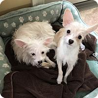 Adopt A Pet :: Sadie and Katie - Nanuet, NY