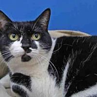Adopt A Pet :: Target - Naples, FL