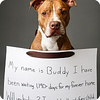 Adopt A Pet :: Buddy - Decatur, GA