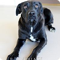 Adopt A Pet :: Adelaide - Appleton, WI