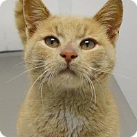 Adopt A Pet :: Sherman - Springfield, IL