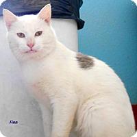 Adopt A Pet :: Finn - Oskaloosa, IA