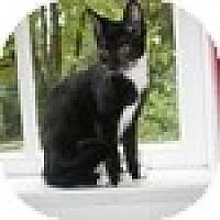 Adopt A Pet :: Trinket - Vancouver, BC