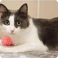 Adopt A Pet :: Abbey - Markham, ON