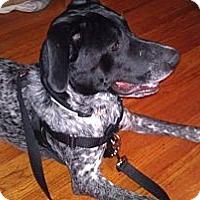 Adopt A Pet :: CASH - Minnetonka, MN