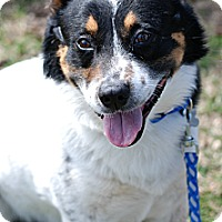 Adopt A Pet :: Jax: Foster needed - Delano, MN