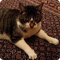 Adopt A Pet :: RUTHIE - SUPER MELLOW SENIOR - Rochester, NY