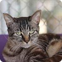 Adopt A Pet :: Fidget - El Cajon, CA