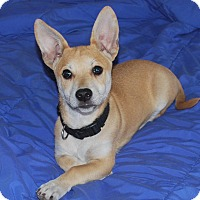 Adopt A Pet :: Karlie - San Francisco, CA
