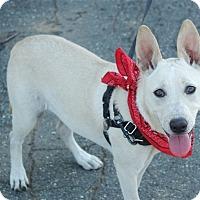 Adopt A Pet :: Peaches puppy - Sacramento, CA