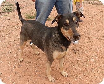Shepherd (Unknown Type)/Doberman Pinscher Mix Dog for adoption in Hurricane, Utah - KAYO