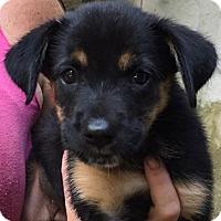 Adopt A Pet :: Buddy#2F - Orlando, FL