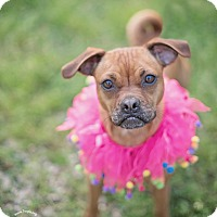 Adopt A Pet :: Baboo - Kingwood, TX