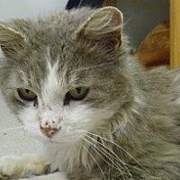 Adopt A Pet :: Captain Jack - Hamburg, NY