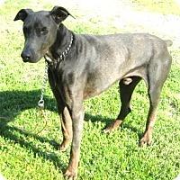 Adopt A Pet :: Gypsy - Hillsboro, OH