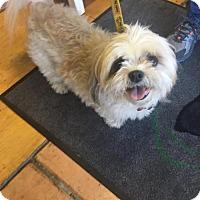 Adopt A Pet :: Stevie - Naples, FL