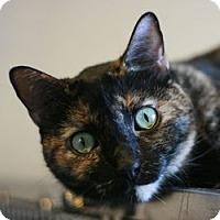 Adopt A Pet :: Angel - Canoga Park, CA