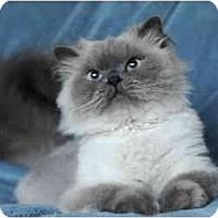 Adopt A Pet :: Wellington - Columbus, OH