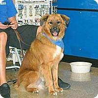 Adopt A Pet :: Kobie - Minneola, FL