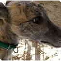Adopt A Pet :: Joe - St Petersburg, FL