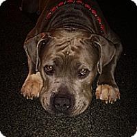 Adopt A Pet :: Dori - Naples, FL