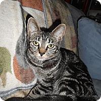 Adopt A Pet :: Audi - Richland, MI