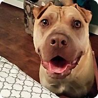 Adopt A Pet :: Dolly in MO - Mira Loma, CA