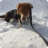 Adopt A Pet :: Baxter - Shelter Island, NY
