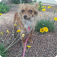 Adopt A Pet :: Sunshine - Las Vegas, NV