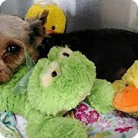 Adopt A Pet :: Trisket - Newark, DE