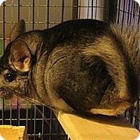 Adopt A Pet :: Mitchell - Titusville, FL
