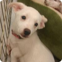 Adopt A Pet :: Juan - Phoenix, AZ