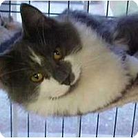 Adopt A Pet :: Snowdrop #1 - Lunenburg, MA