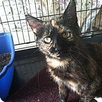 Adopt A Pet :: Ivy - Strongsville, OH