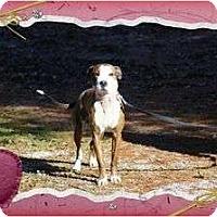 Adopt A Pet :: Chance 2 - Staunton, VA