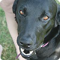 Adopt A Pet :: Sadie - Franklin, TN