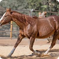 Adopt A Pet :: Roxie - El Dorado Hills, CA