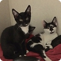 Adopt A Pet :: HOWARD - Hamilton, NJ