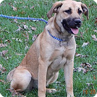 Anatolian Shepherd/Great Pyrenees Mix Puppy for adoption in Niagara Falls, New York - Lila (55 lb) Video!
